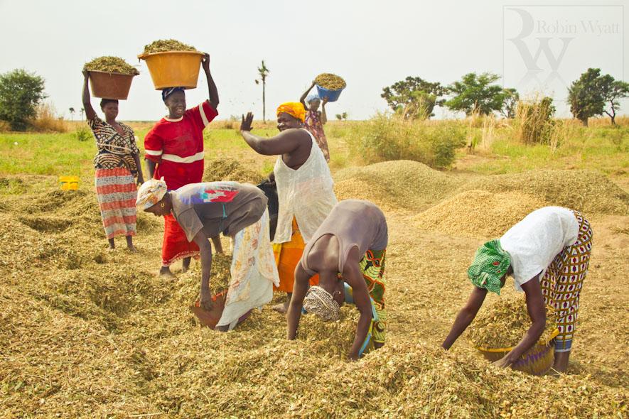 Atelier de restitution et de suivi des politiques agricoles : L'autosuffisance alimentaire du Sénégal au menu