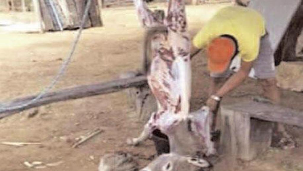 """Audition du chevillard Babacar Sarr : """"A la Sogas, la viande d'âne est mélangée à celle de bœuf, chèvre et mouton"""""""