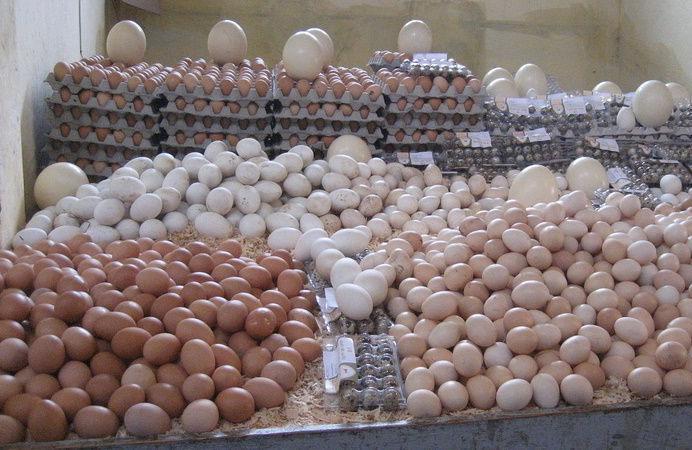 Ouakam : Des œufs impropres à la consommation volés installent l'inquiètude