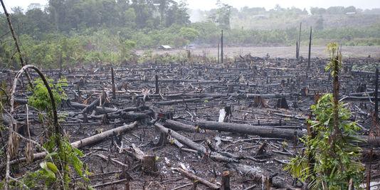 Pillage des forêts en Casamance : Le Collectif des cadres casamaçais tirent la sonnette d'larme