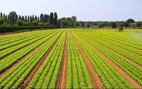 Enquête nationale sur les métiers dans le secteur agricole et rural : Les entreprises priées de collaborer