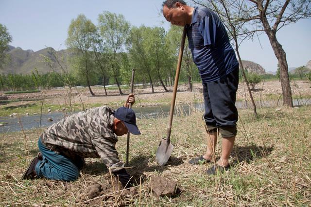 Deux Chinois plantent une forêt malgré leur handicap