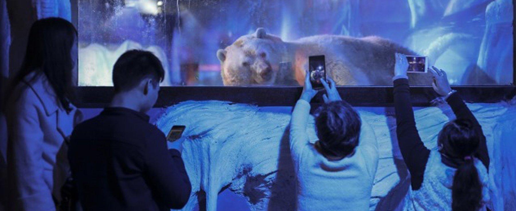 En Chine, un centre commercial exhibe des animaux dans des conditions de détention scandaleuses.