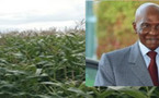 Le président Abdoulaye Wade sur la GOANA : ''Les conditions sont réunies pour avoir de bonnes récoltes''