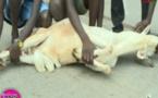 Vidéo: les erreurs à ne pas commettre avant d'égorger le mouton