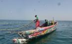 Gestion de ressources halieutiques : Plus de 12.000 pots à poulpe immergés à Mbour