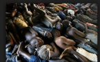 Suite à la vague d'indignation sur les conditions des détenus : Pensez donc à ces veuves et orphelins provoqués par ces criminels que vous défendez !