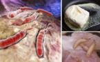 Les aliments toxiques causant le cancer que vous ne devez jamais consommer