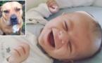 Un bébé de 4 mois dans les bras de sa mère, attaqué et tué par le chien domestique de la maison