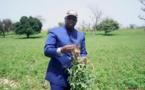 La maîtrise insuffisante de l'eau est le premier obstacle à l'accélération de la cadence de l'agriculture sénégalaise (Par le Pr Demba SOW)