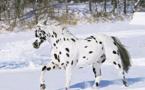 Ces chevaux ont les couleurs les plus exceptionnelles et les plus belles du monde ! Ils sont vraiment splendides !