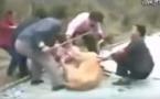 Choc!  Un lion attaque une petite fille dans un zoo et refuse de lâcher prise, Ames sensibles s'abstenir...