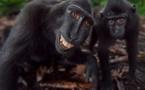 Insolite : Des singes qui sourient comme des humains, regardez...