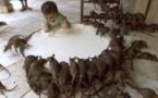 Paris lance un plan d'attaque contre les rats