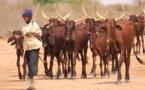Le chef de l'État va prendre langue avec le Garde des Sceaux, avec le Conseil supérieur de la magistrature et avec le Conseil national de sécurité pour que toutes les mesures soient prises pour mettre fin à cette pratique qui freine le développement du secteur de l'élevage.