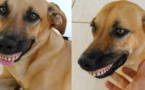 Ce chien n'arrête plus de sourire après avoir trouvé un dentier dans le jardin