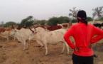 Ndeye Penda Tall, femme de Idrissa Seck s'est-elle convertie en éleveur?