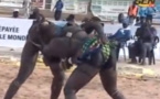 Vidéo: Nguel Dione Terrasse Cartouche ! Quel Combat ! Regardez.
