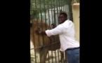 """Vidéo – Eumeu Sène au parc de Hann. Quand un """"Lion"""" en caresse un autre – Regardez"""