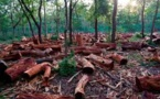 Linguère : Un indicateur des Eaux et Forêts tire sur un chauffeur
