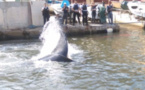 Une baleine s'égare dans le Vieux-Port de Marseille