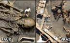 Les squelettes de géants n'existent pas...