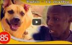 Patin affronte un chien méchant... Regardez la suite ....à mourir de rire!!