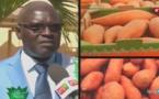 Les différentes variétés de manioc au Sénégal: Suivez les explications !