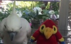 Une peluche imite un perroquet et celui-ci finit par en avoir assez !!!