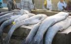 Matam : Un vendeur de poisson tue son ami