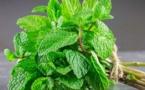 Les feuilles de menthe pour sécher l'acné et nettoyer les pores