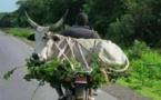 Arrêt sur image - A chacun ses vaches et le troupeau sera bien gardé