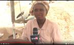 VIDEO - Fête du travail: Le calvaire des travailleurs de l'arachide à Kaolack