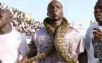 Ndéye Ndack, Ama Baldé et les serpents