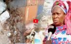 VIDEO - Yarakh: Invasion des cafards dans la localité