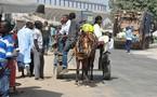 SENEGAL : 2012 démarre en charrette (Images de Dakar en calèche)
