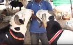 VIDEO - Tabaski 2019: Des moutons jusqu'a 4 millions de francs CFA !