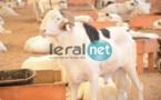 """PHOTOS - A la découverte de la bergerie Khadim Rassoul, spécialiste du mouton """"Ladoum"""""""