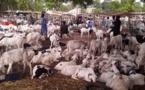 La Tabaski de galère de Bakary: A défaut d'un mouton, le géomètre se contente d'une brebis et essuie les pleurs de sa femme !