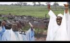 VIDEO - Préparatifs Magal 2019: L'arrivée des boeufs des Thiantacounes