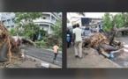(Photos)- Orages à Dakar: Deux arbres terrassés par le vent sur l'avenue Lamine Guèye