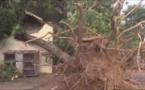 VIDEO- Thiès: Le vent déracine un grand caïlcédrat qui tue une femme