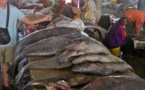 Marché aux poissons de Saint-Louis: Le bâtiment menace de s'effondrer