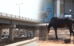 VIDEO - PARCELLES ASSAINIES: Les conducteurs de charrettes encombrent et salissent les rues de la VDN2