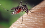 Kaffrine : 27 personnes mortes du paludisme en 2019