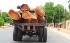 Vidéo: pillage du bois au Sénégal, vers la disparition des  forêts