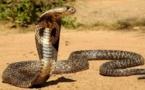 Sédhiou: Mamadou Diang Diallo, frère du correspondant de DMédia mortellement mordu par un serpent