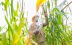 Visite à Nioro: Le President Macky encourage les cultivateurs pour cette belle campagne agricole