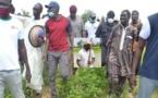 En visite dans les régions : Quand Sonko expérimente les vacances agricoles patriotiques…