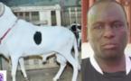 Vol de moutons chez Boy Kaïré: Les présumés voleurs entendus dans le fond par le Dji